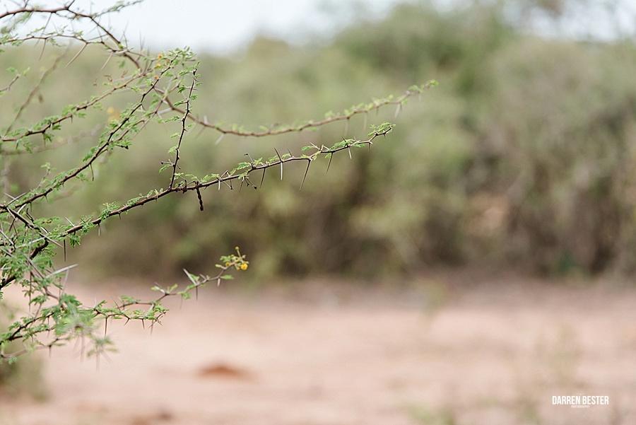Darren Bester - Photographer - Royal Malewane - Safari - Luxury Travel - Photographer_0011.jpg
