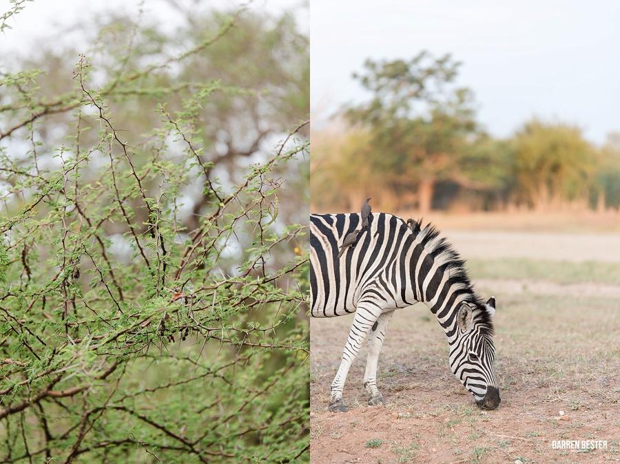 Darren Bester - Photographer - Royal Malewane - Safari - Luxury Travel - Photographer_0013.jpg