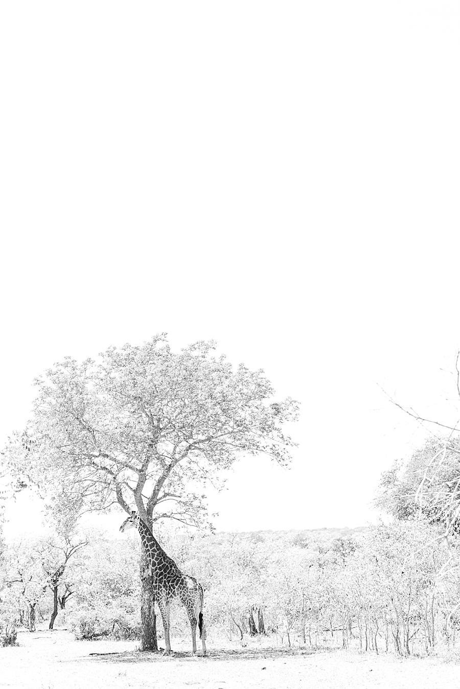 Darren Bester - Photographer - Royal Malewane - Safari - Luxury Travel - Photographer_0014.jpg