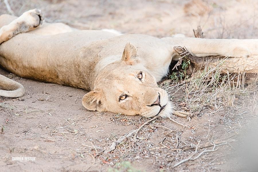 Darren Bester - Photographer - Royal Malewane - Safari - Luxury Travel - Photographer_0016.jpg