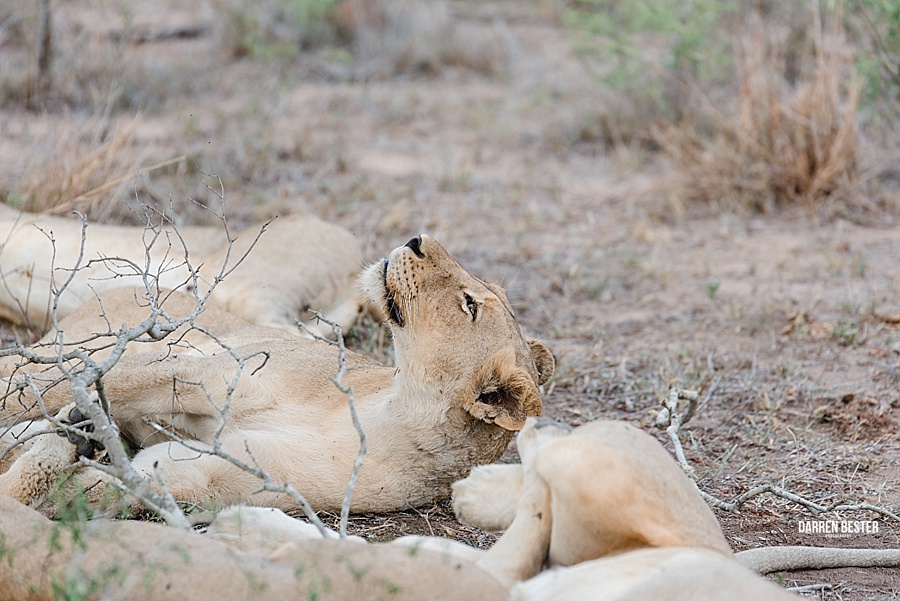 Darren Bester - Photographer - Royal Malewane - Safari - Luxury Travel - Photographer_0018.jpg