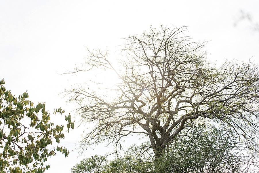 Darren Bester - Photographer - Royal Malewane - Safari - Luxury Travel - Photographer_0019.jpg