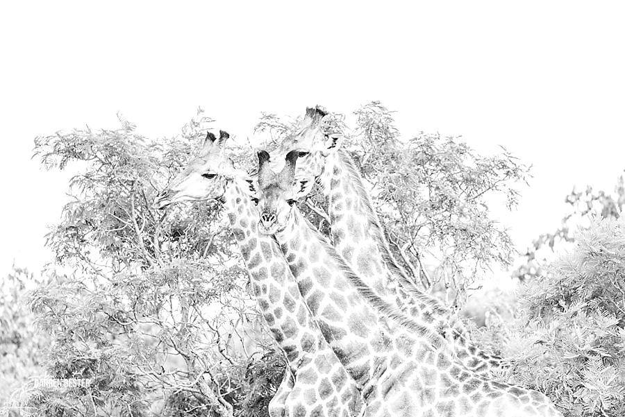 Darren Bester - Photographer - Royal Malewane - Safari - Luxury Travel - Photographer_0020.jpg