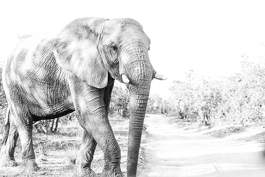 Darren Bester - Photographer - Royal Malewane - Safari - Luxury Travel - Photographer_0021.jpg