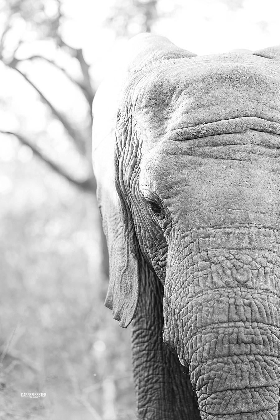 Darren Bester - Photographer - Royal Malewane - Safari - Luxury Travel - Photographer_0022.jpg