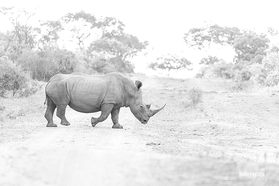Darren Bester - Photographer - Royal Malewane - Safari - Luxury Travel - Photographer_0024.jpg