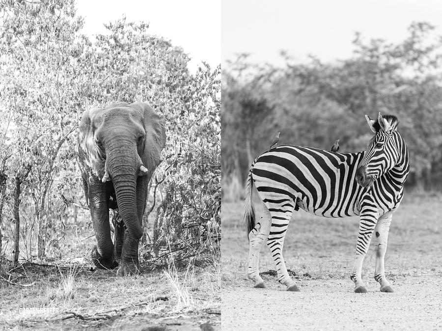 Darren Bester - Photographer - Royal Malewane - Safari - Luxury Travel - Photographer_0025.jpg