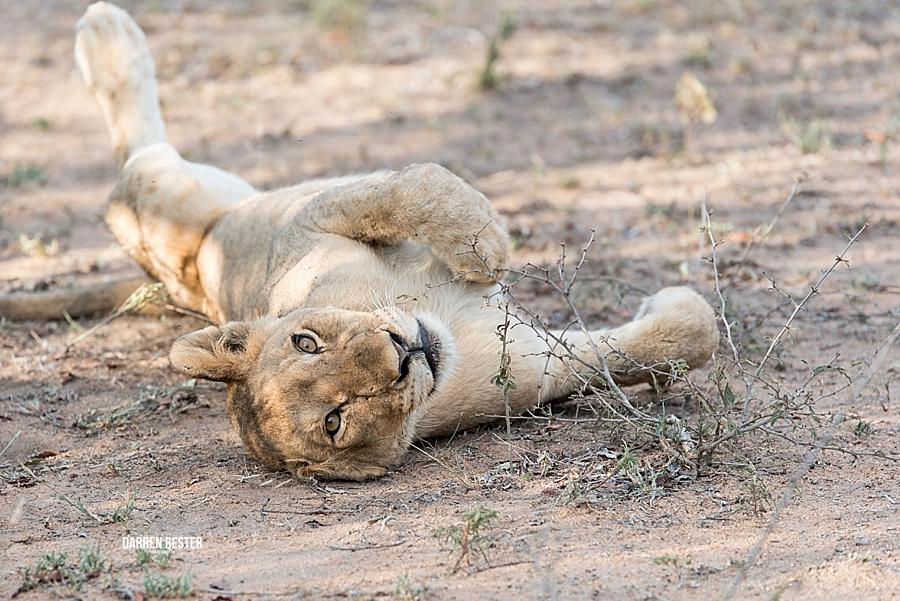 Darren Bester - Photographer - Royal Malewane - Safari - Luxury Travel - Photographer_0026.jpg