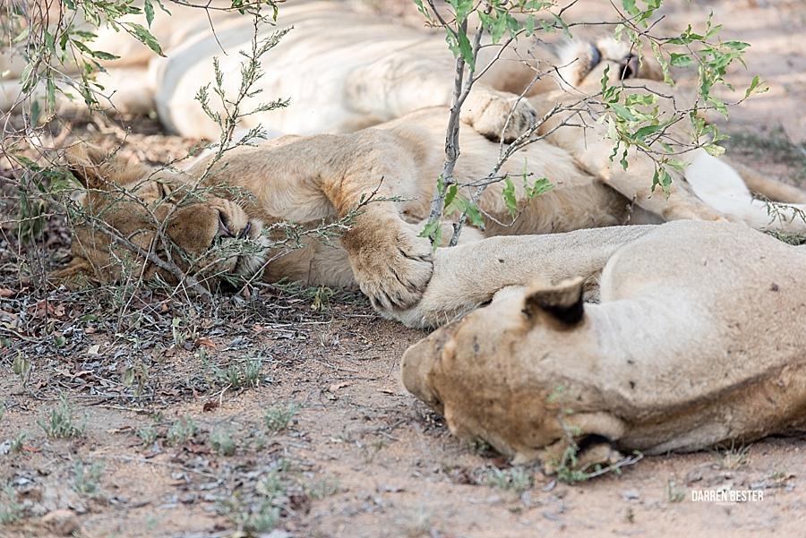 Darren Bester - Photographer - Royal Malewane - Safari - Luxury Travel - Photographer_0028.jpg