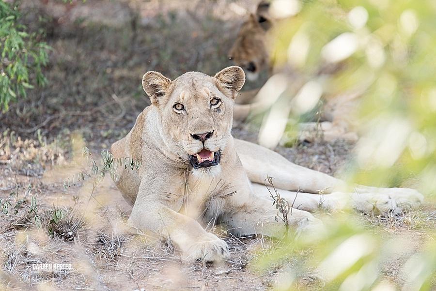 Darren Bester - Photographer - Royal Malewane - Safari - Luxury Travel - Photographer_0029.jpg