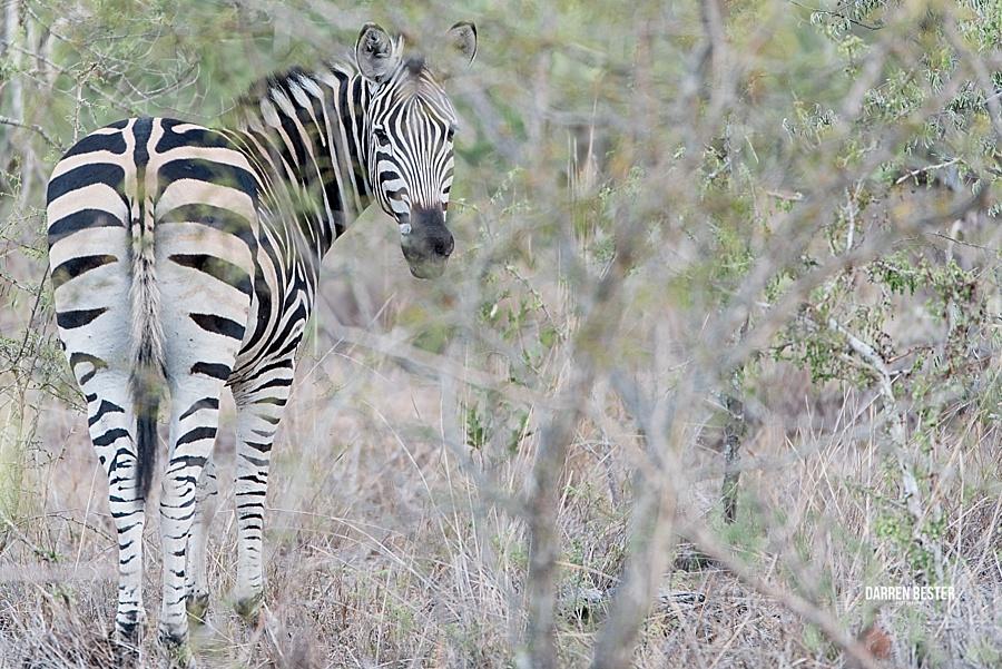 Darren Bester - Photographer - Royal Malewane - Safari - Luxury Travel - Photographer_0030.jpg