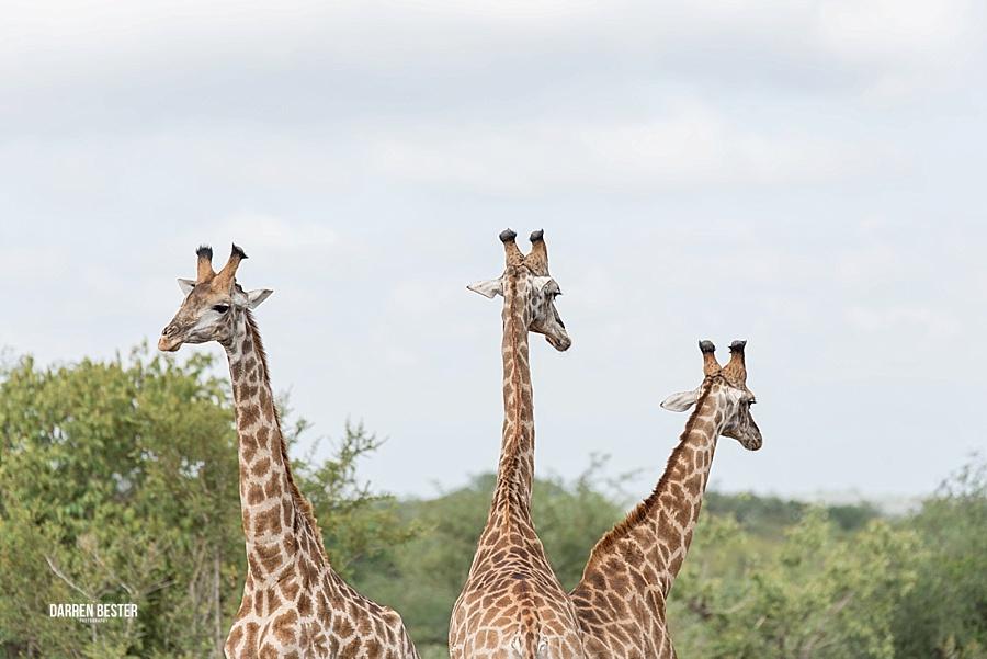 Darren Bester - Photographer - Royal Malewane - Safari - Luxury Travel - Photographer_0032.jpg