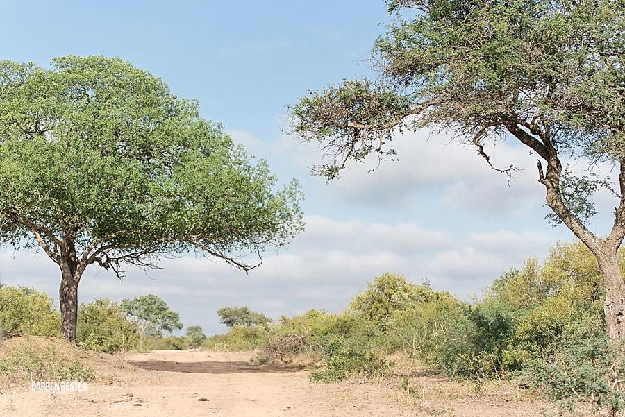 Darren Bester - Photographer - Royal Malewane - Safari - Luxury Travel - Photographer_0033.jpg