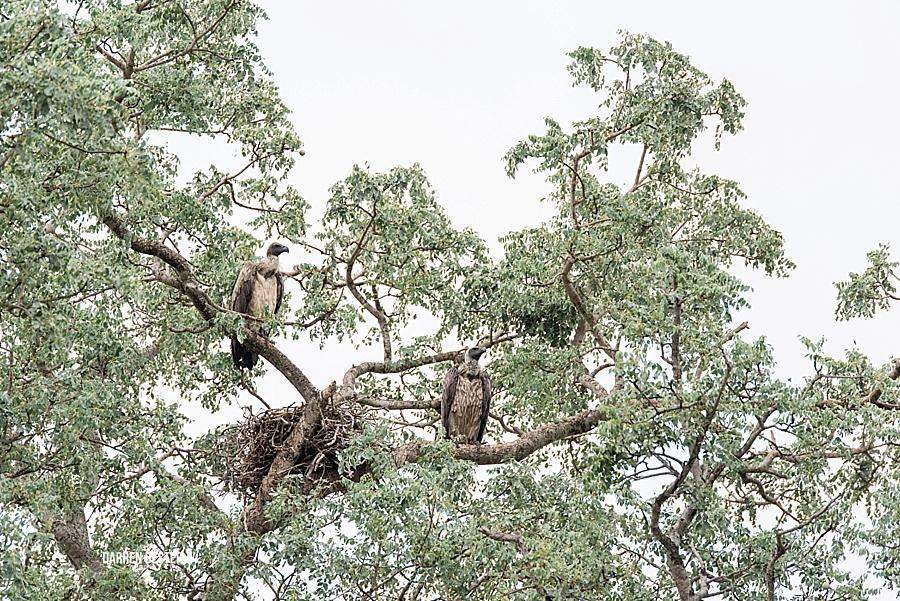 Darren Bester - Photographer - Royal Malewane - Safari - Luxury Travel - Photographer_0035.jpg