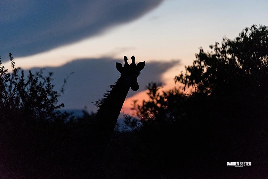 Darren Bester - Photographer - Royal Malewane - Safari - Luxury Travel - Photographer_0036.jpg