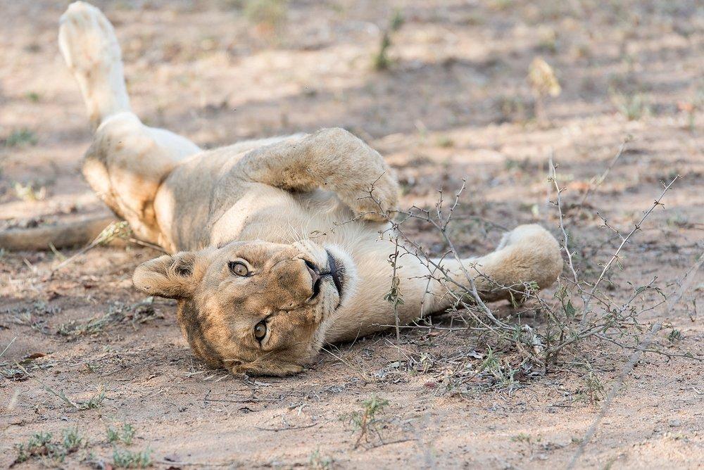 Darren-Bester-Photographer-Royal-Malewane-Safari-Luxury-Travel-Photographer_0037.jpg