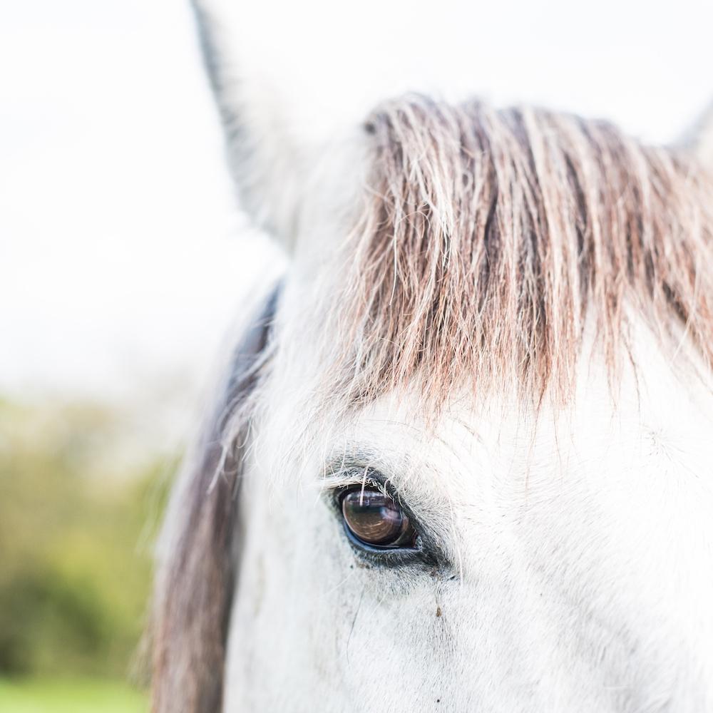 The Horse Whisperer - Greyton