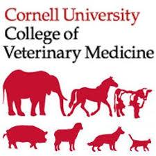 cornell animals.jpg
