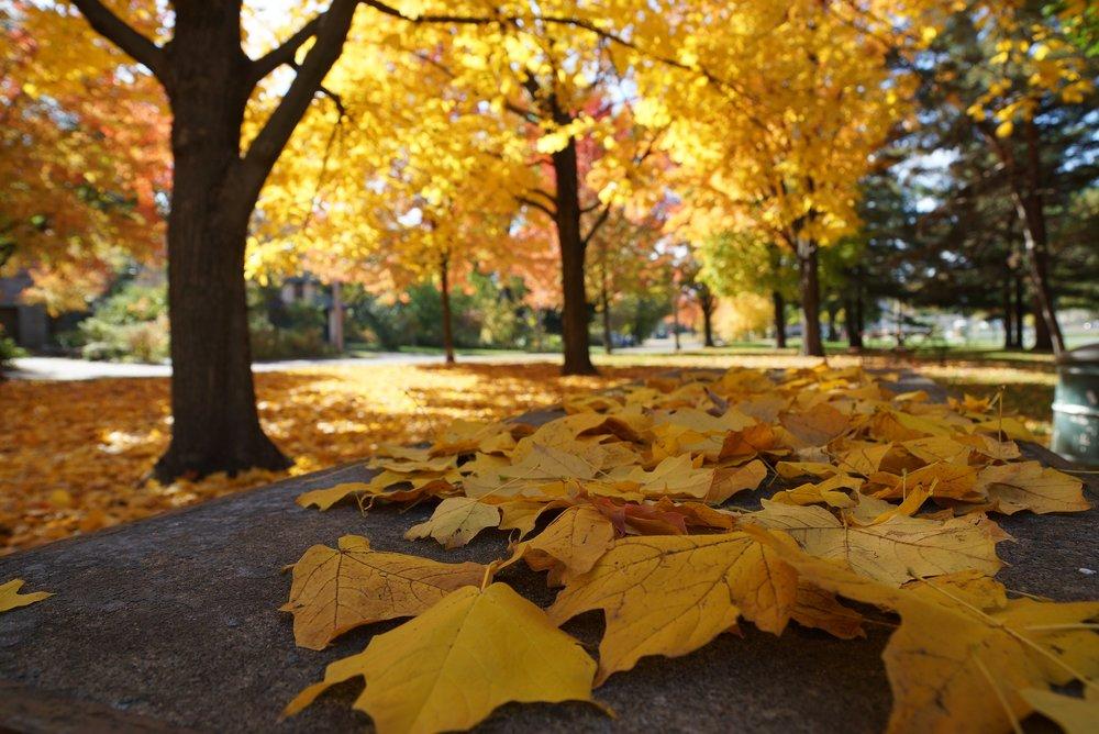 autumn-2898551_1920.jpg