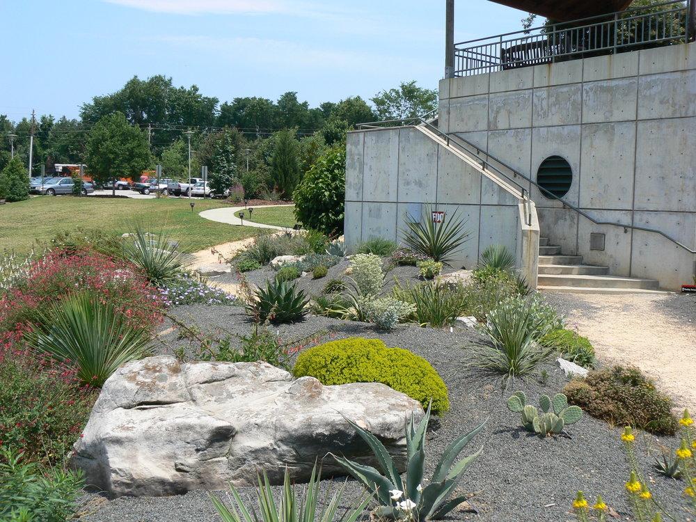 Drought Garden JCR NCSU.JPG