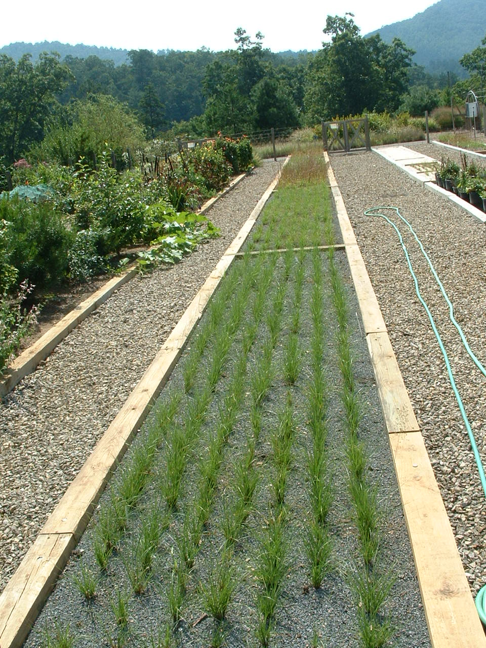 3 Bioretention 9-1-05 026.jpg
