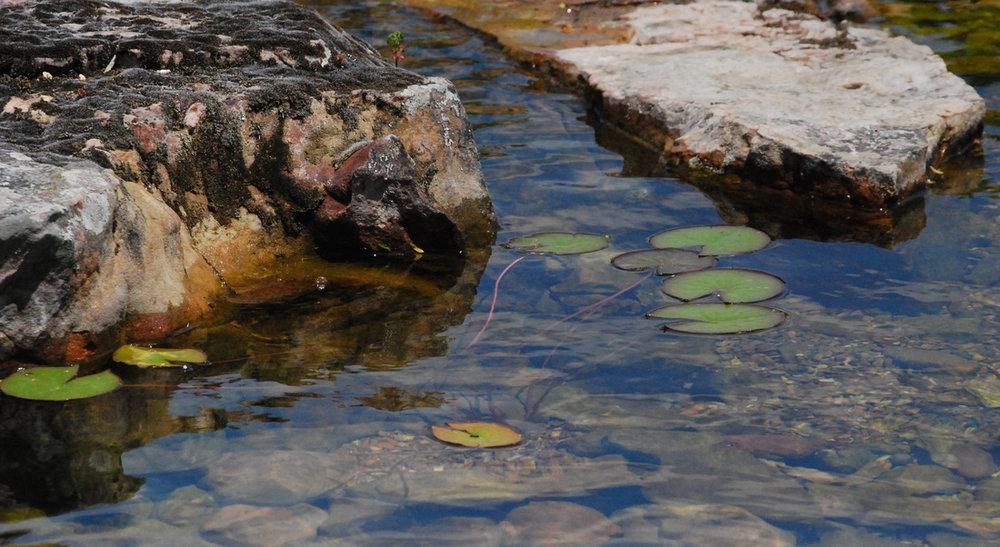 31 total habitat lily pad.jpg