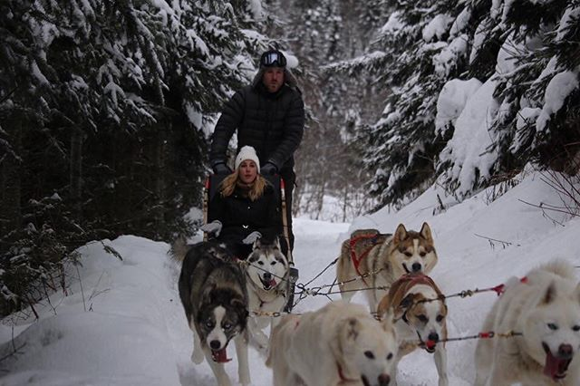 I can now say I've been dogsledding and I drove the sled! Way more work then I anticipated. My arms are sore today but holy crap it was awesome!! See more in my stories