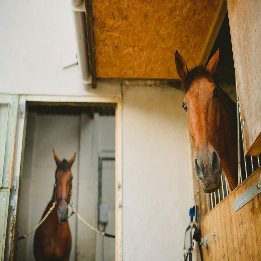 EquestrianPlanning -