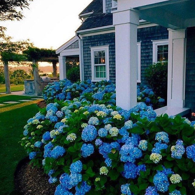 Who wouldn't want to have these spring hydrangeas and this beautiful Nantucket home as a listing? Showcasing brands, homes, lifestyles, and market intelligence is our specialty. #realestatebroker #realestatewebdesign #websites #brokers #luxurylifestyle #luxuryhomes #listings #luxuryrealestate #housebeautiful #craftsmanhome #nantucket