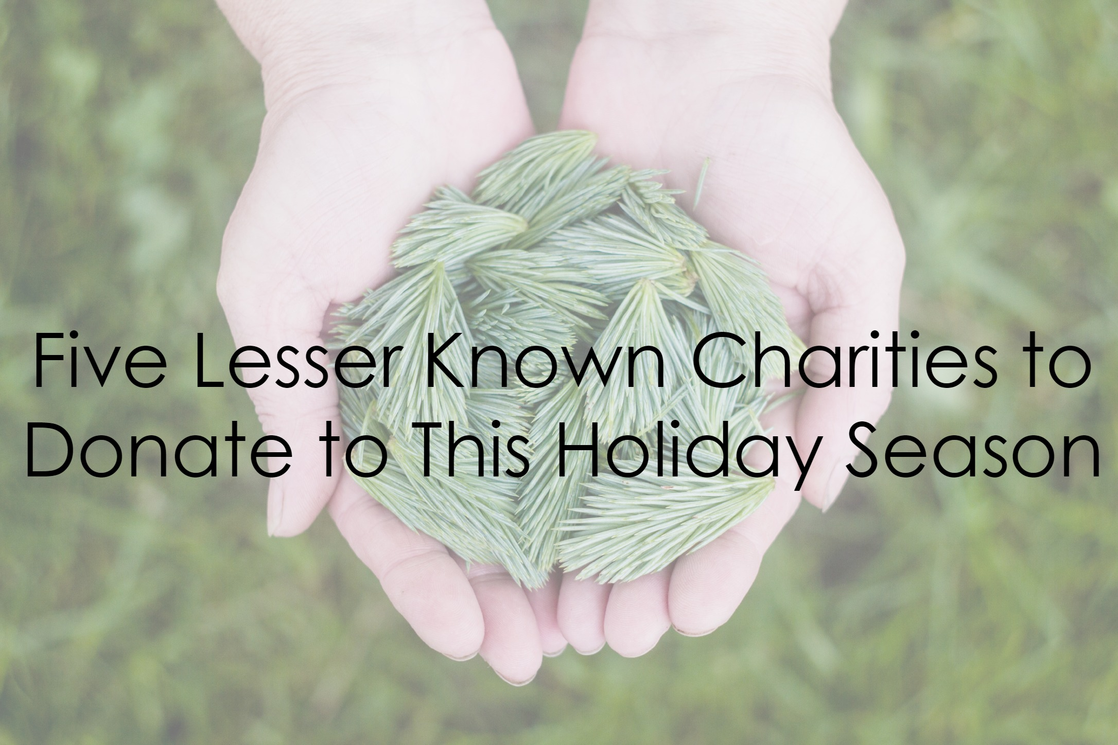 Celebrate the Season: Five lesser known charities to donate to this holiday season