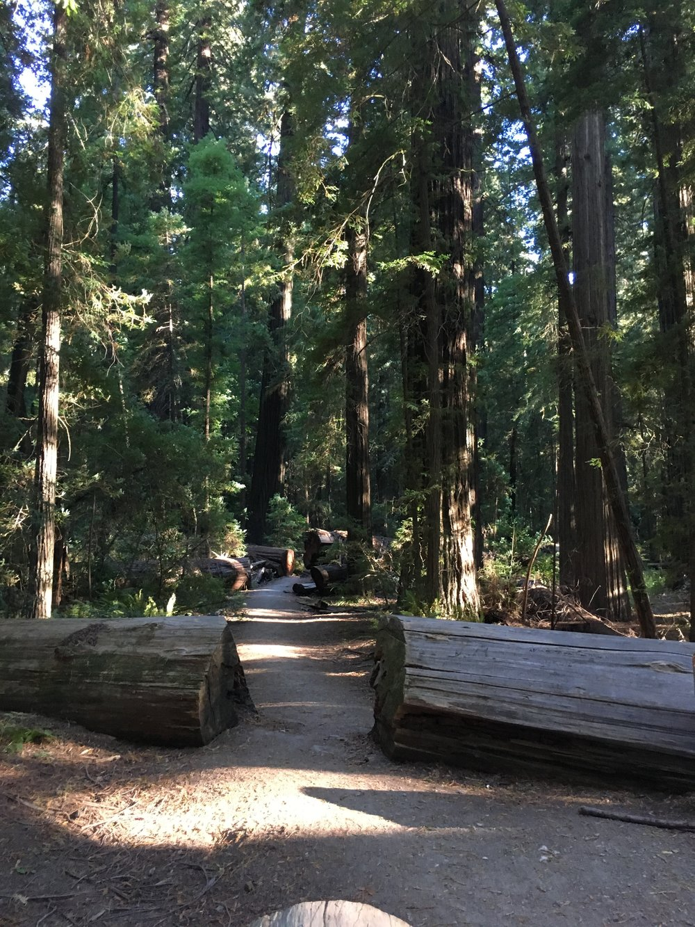 Why Everyone Should Visit the California Redwoods - wear she blossoms