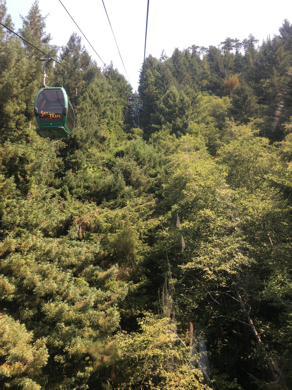 Why Everyone Should Visit the California Redwoods - The Skytrail at the Trees of Mystery