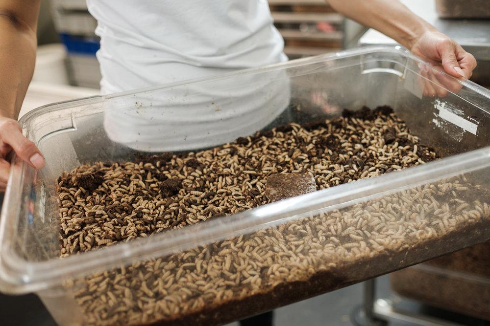 De Kempen Insect Cluster wil bedrijven bijeenbrengen, om dankzij snelle en laagdrempelige samenwerking  innovatieve producten en diensten rond insecten  uit te werken en in de markt te zetten.