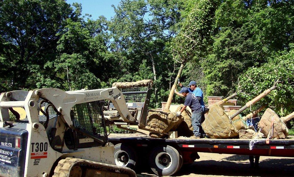 seeb tree unload.jpg