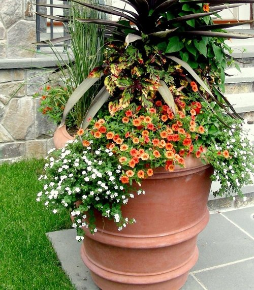 Morano_Landscape_Plant_Shop_Nursey_Design_Center_Garden_Center_Products_Services_Workshops_Products_Plants5 - Copy.jpg