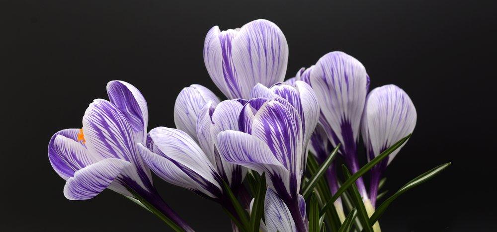 beautiful-bloom-blooming-355363.jpg
