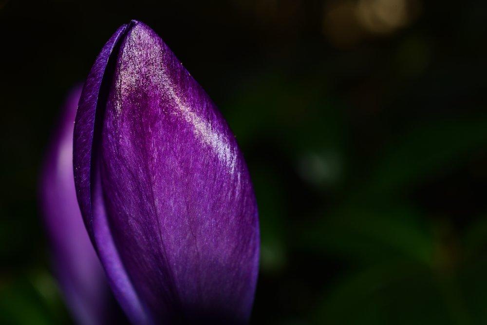bloom-blossom-close-up-57438.jpg