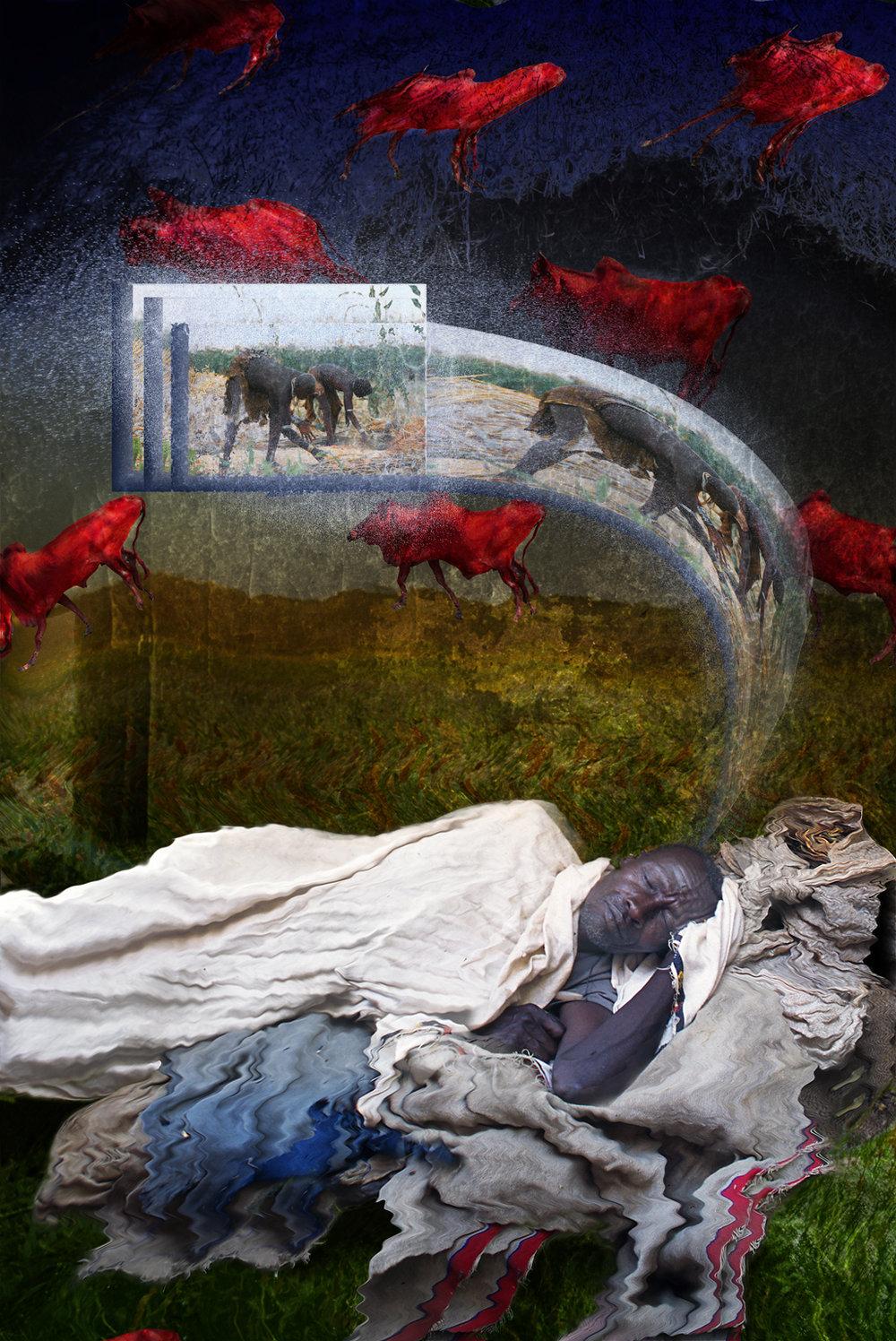 Red cattle dreamMasterB-iPad.jpg
