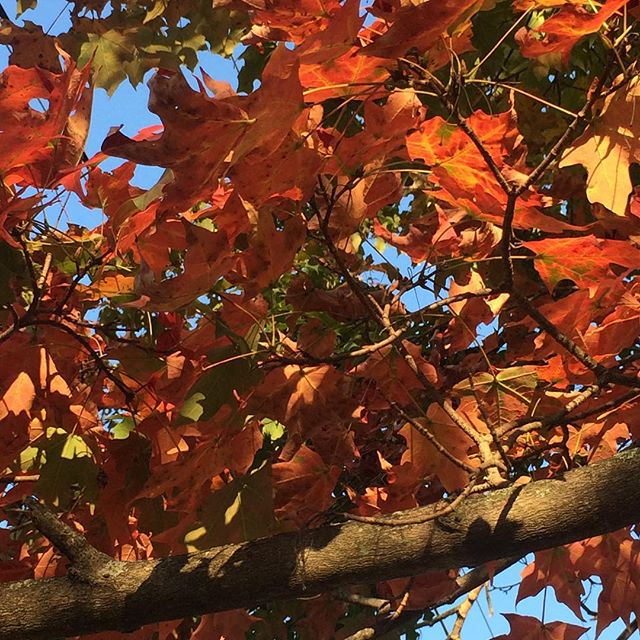 Spotted the first signs of Fall & loving the crisp weather today 🍁. . . . #naturelover #fallinohio #changeofseason #nofilter #enjoythelittlethingsinlife #mixedmediaartist #inspiredbynature #colorenthusiasts #nature_perfection #flashesofdelight #noticethebeauty #savorthenow #favoritethings