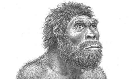 A representation of Homo  erectus  developed from fossil-skull evidence.