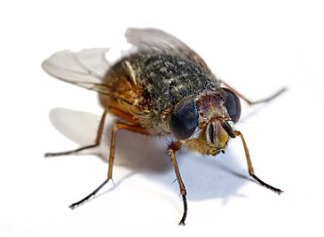 housefly.jpg
