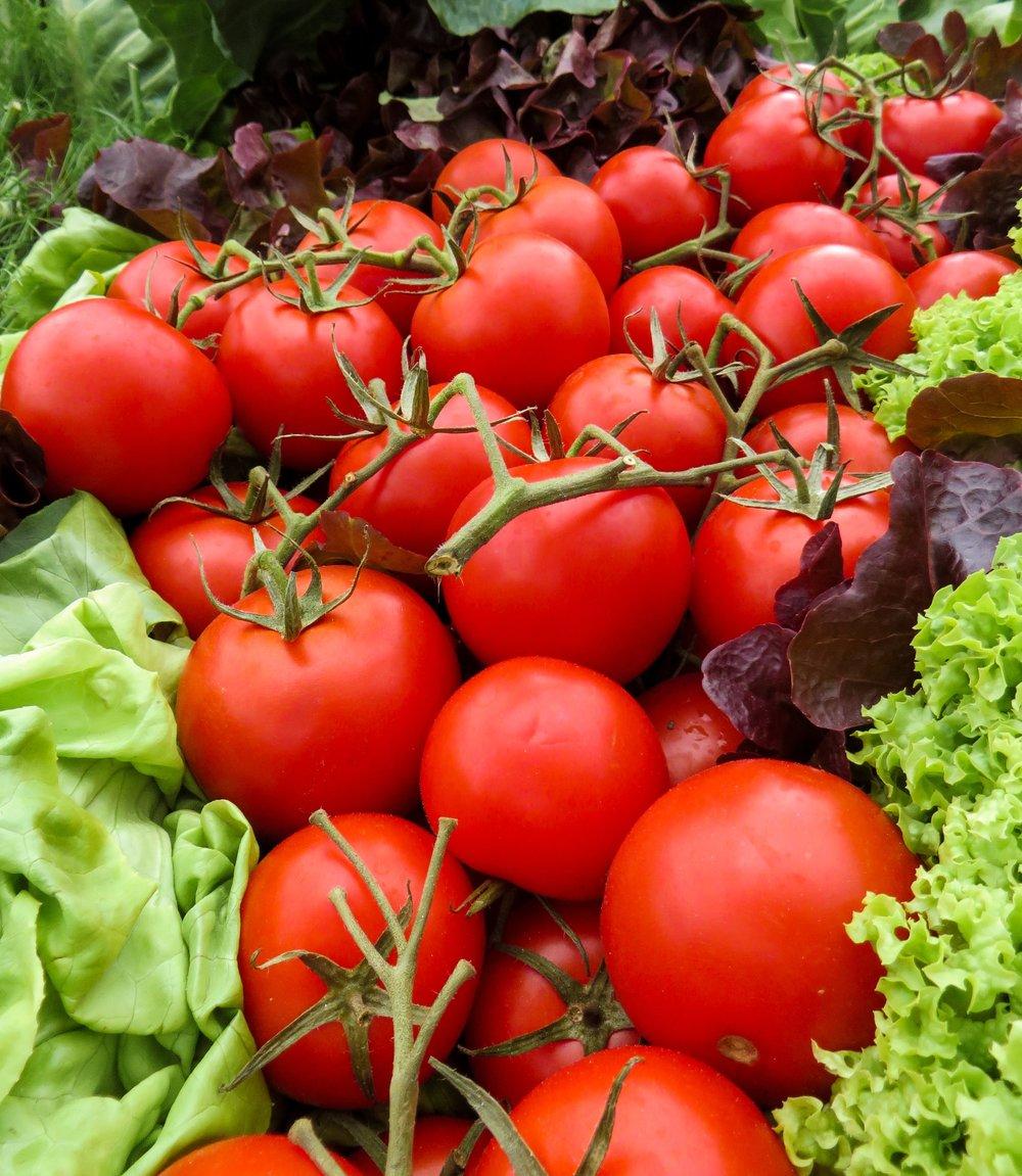 tomatoe 2.jpeg