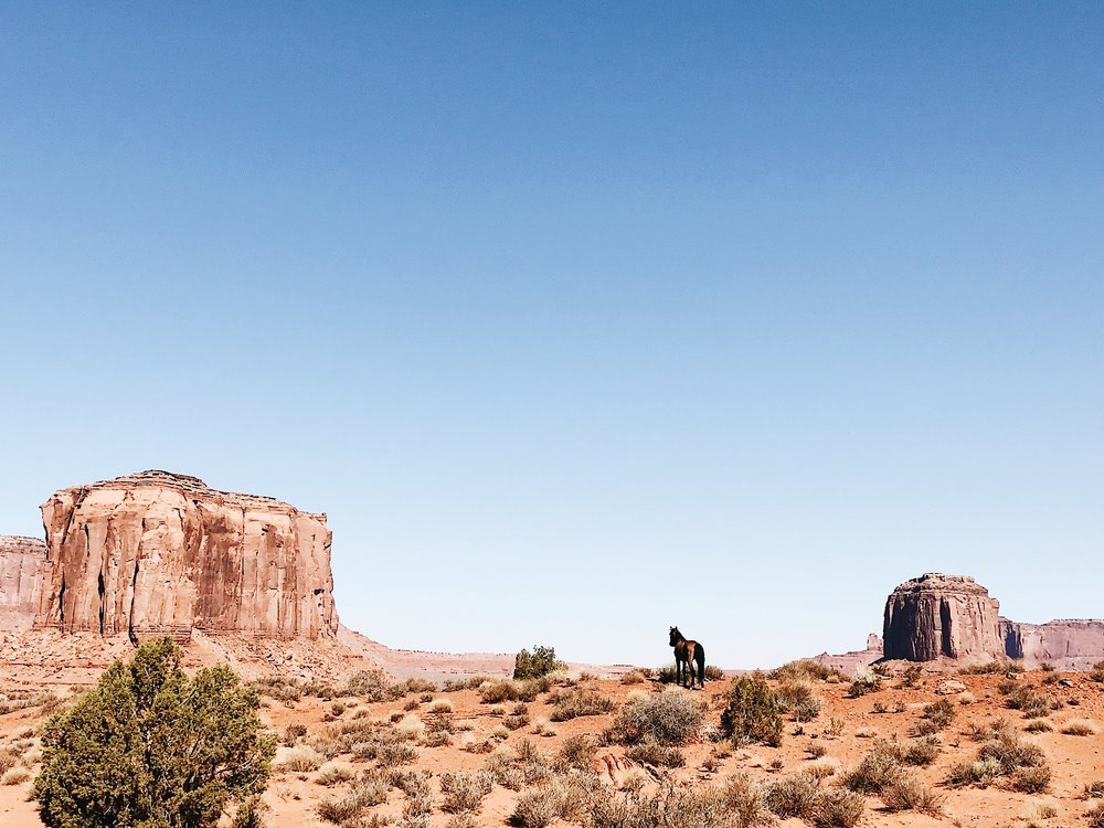 Wild horse looking over rim at Artist's Point Overlook, Monument Valley, Valley Drive