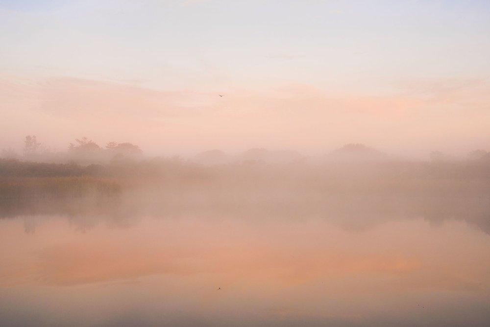 8 - Pink mist 5 LR sm copy 2.jpg