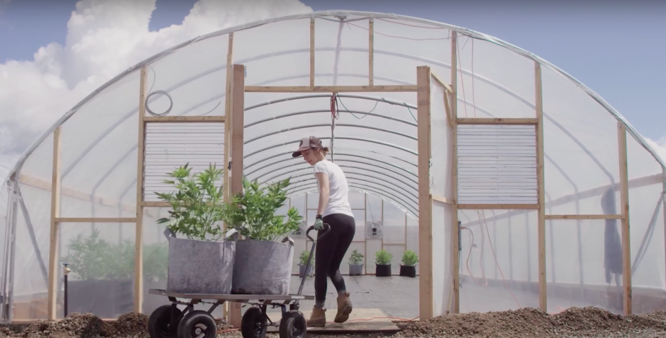 A worker at HiFi Farms in Oregon lugs cannabis into a greenhouse // Photo Go Legal!