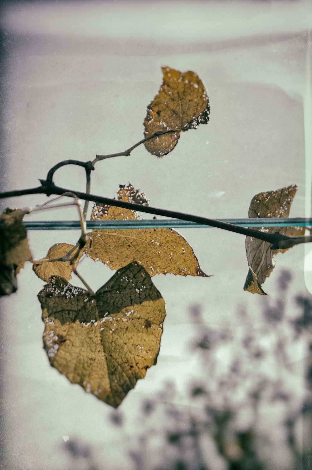 Remember Series--Clothesline Bl-Wh lite green wetplate1.jpg
