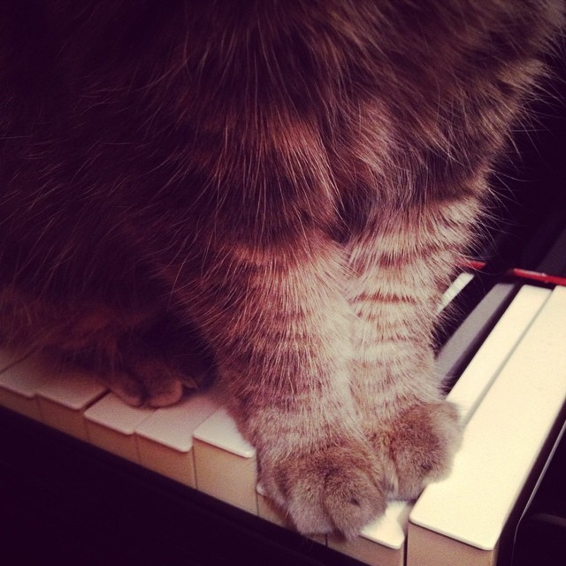 My cat always comes to listen when I play the piano