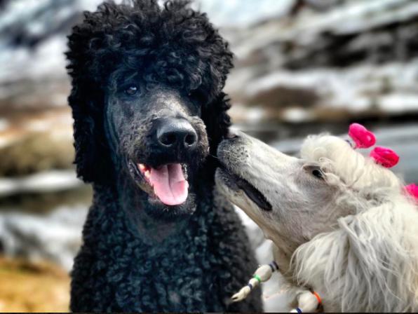 Pali kisses big brother, Wallace