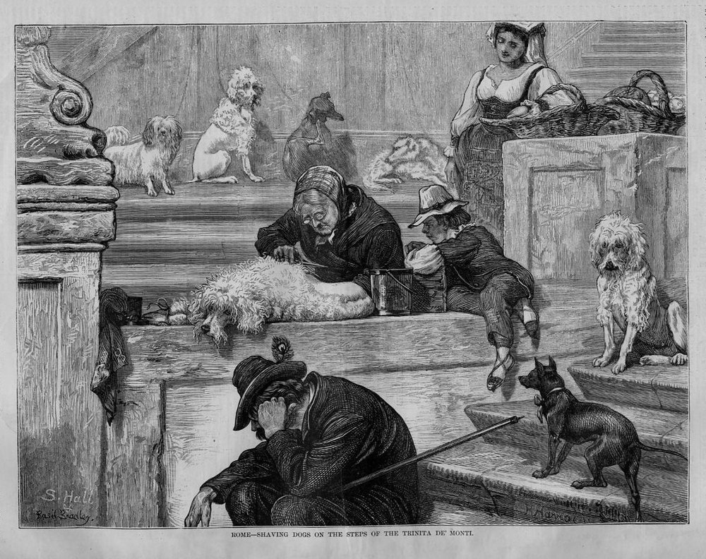 My favorite historical sketch of Poodle life. Poodle grooming at it's finest, on the streets of Rome in the 19th century.