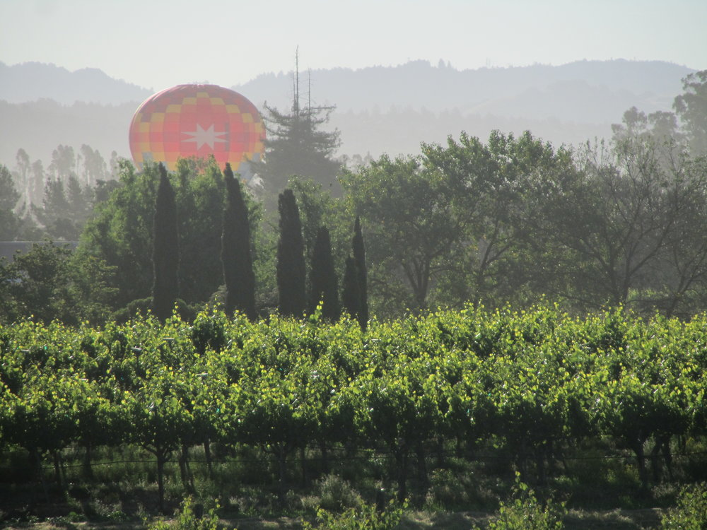 balloon over vineyard.JPG